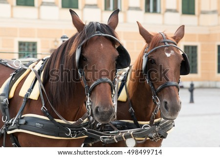 Two Brown Horses, Traditional Called Fiaker, waiting for Hire at Schloss Schonbrunn Palace, Vienna, Austria.