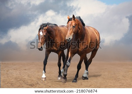 Two brown horses trotting free  at the desert - stock photo