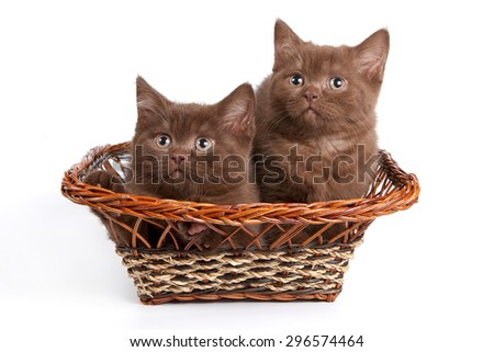 Two brown kitten sitting in a basket (isolated on white)