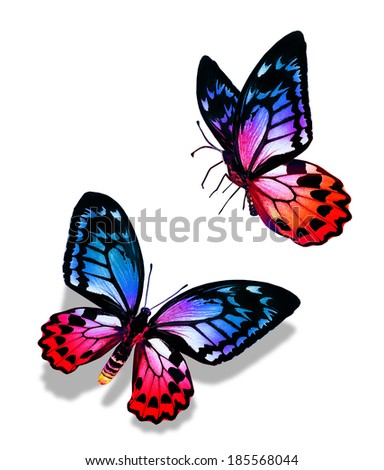 Two butterflies on white background
