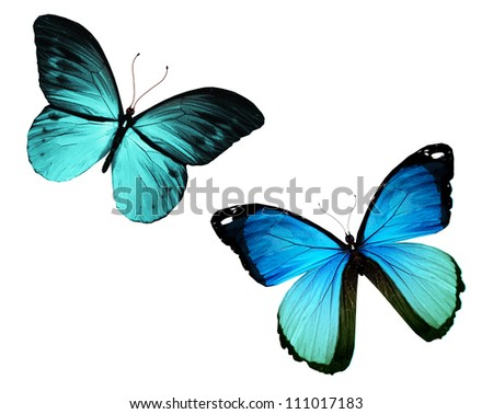 Two butterfly flying, isolated on white background