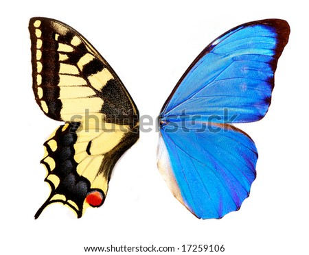 Two butterfly wings - stock photo