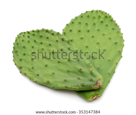 two cactus leaves close up on white background
