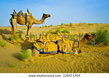 Two camels in the desert near Jaisalmer, Rajasthan, India - stock photo