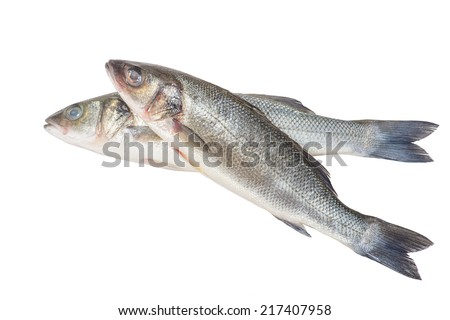 Two Canada Striped bass whole fresh fish, also called Atlantic striped bass, striper, linesider, rock or rockfish, product of Canada, isolated on white background.
