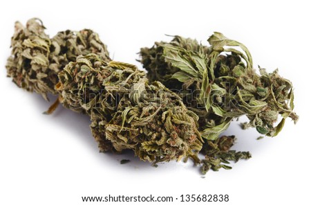 Two Cannabis buds that had been grown by hydroponic process, isolated on white background. - stock photo