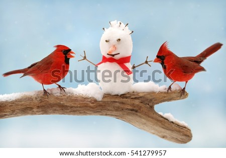 Two cardinals and snow man