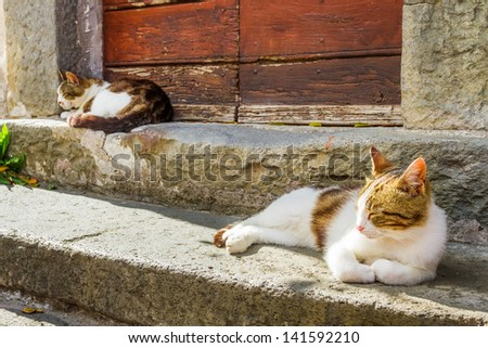 Two cats basking in the sun on the porch - stock photo