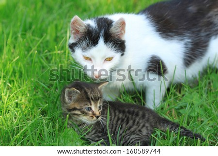 Two cats, black and white mother and her tabby kitten