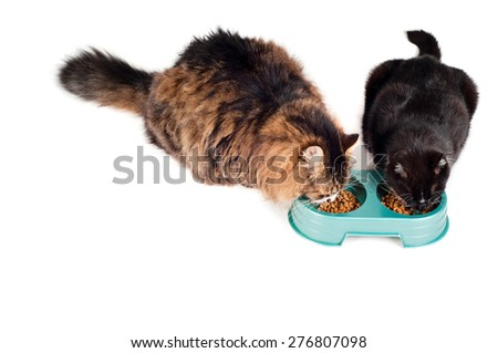 Two cats eating from a green bowl, isolated on white - stock photo