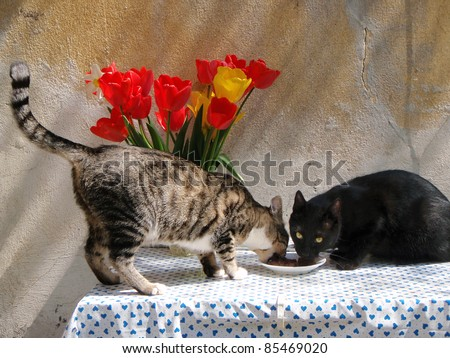 Two cats eating from a plate on a table - stock photo
