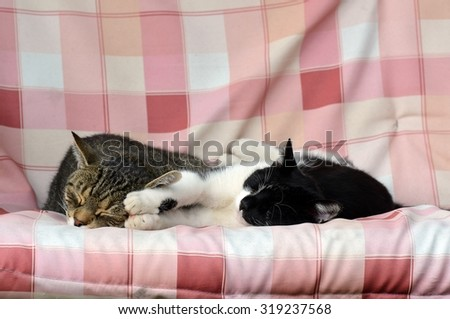 Two cats in a hug on a swing in the garden