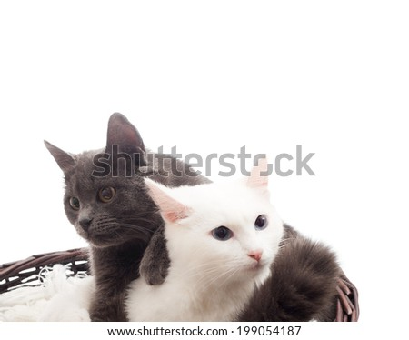 two cats in a wicker basket on a white background isolated