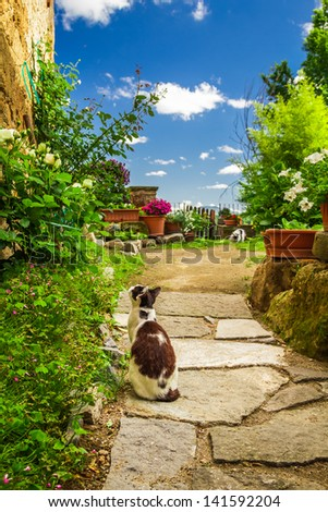 Two cats in ancient garden - stock photo
