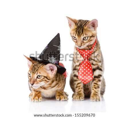 two cats in costume for a masquerade. isolated on white background  sc 1 st  Shutterstock & Two Cats Costume Masquerade Isolated On Stock Photo (Royalty Free ...