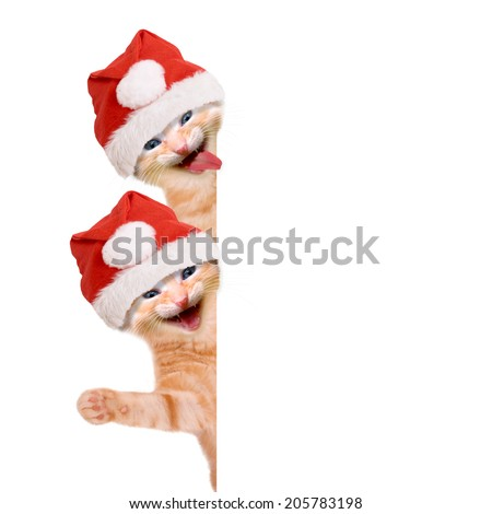 Two cats, laughing and waving with christmas hat, isolated on white background
