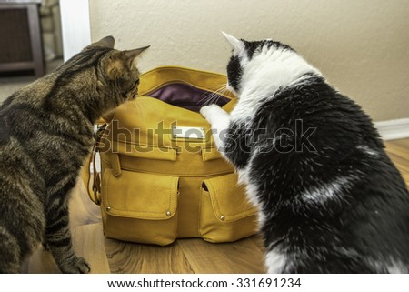Two cats looking inside of a purse - stock photo