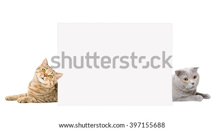 Two cats lying behind a banner, isolated on white background - stock photo