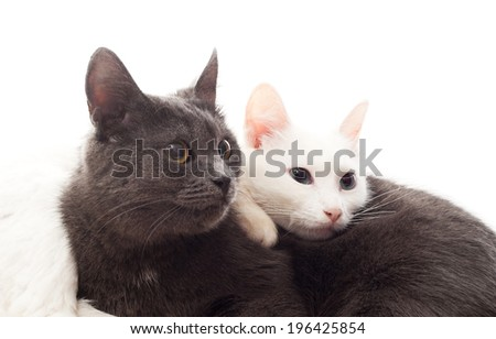 two cats lying on white cover