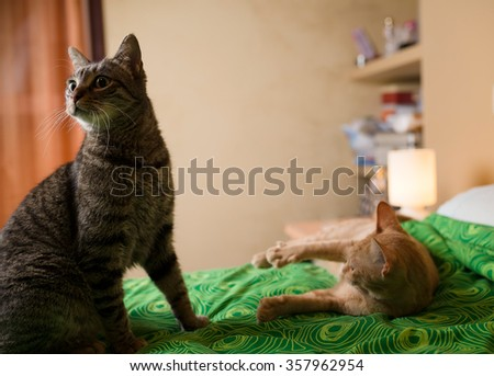 Two cats on a bed at home. - stock photo
