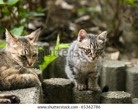 Two cats on a wooden log