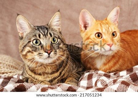 Two cats on blanket on brown wall background - stock photo