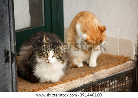Two cats outside their home.