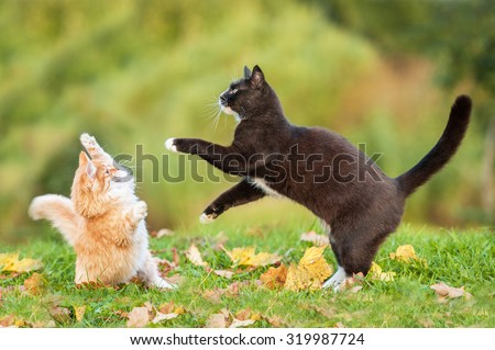 Two cats playing in autumn - stock photo