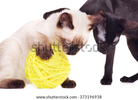 Two Cats Playing With Woolen Ball - stock photo