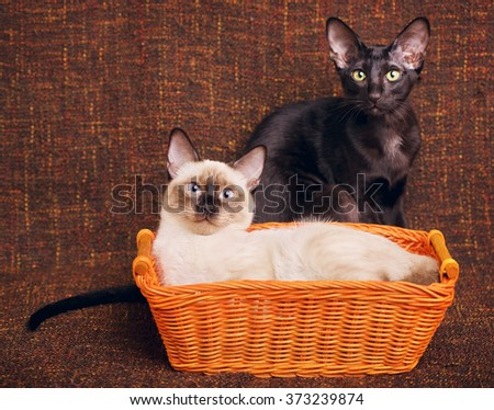 Two Cats Portrait - stock photo