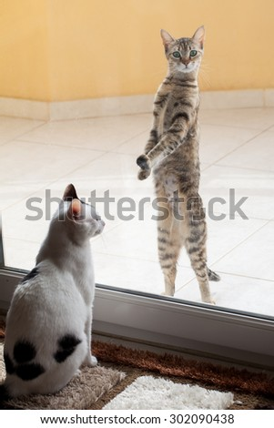 Two cats separated by the window
