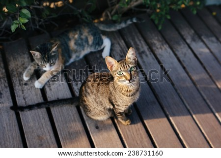 Two cats sitting at the street. Cute cat with green eyes looking straight to the camera. Cyprus cats. - stock photo