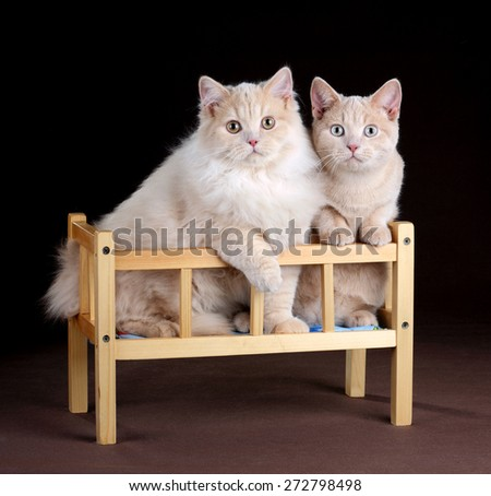 Two cats sitting in a crib