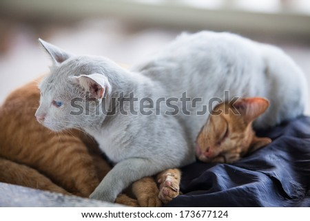 Two cats sleeping - stock photo