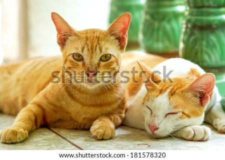 Two cats sleeping and waking - stock photo