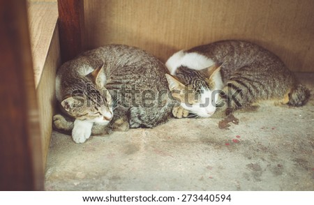 two cats sleeping together. concept about animals and pets - stock photo