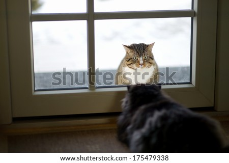 Two cats staring at each other through a window - stock photo