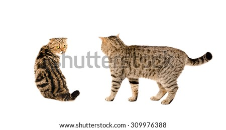 Two cats together isolated on white background - stock photo