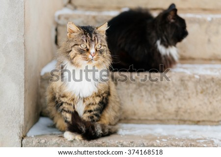 Two cats wait for master outdoor