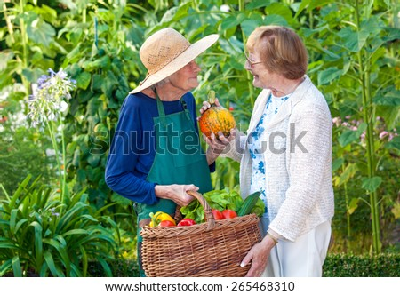 Two Cheerful Senior Ladies Chatting at the Farm While Carrying a Basket of Fresh Healthy Vegetables. - stock photo