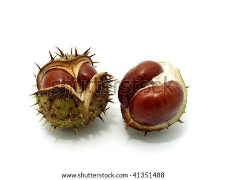 Two Chestnuts - stock photo
