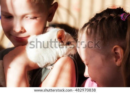 Two children - a boy and a girl playing with a white chinchilla