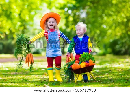 Two children picking fresh vegetables on organic bio farm. Kids gardening and farming. Autumn harvest fun for family. Toddler kid and preschooler play outdoors. Healthy nutrition for child and baby. - stock photo