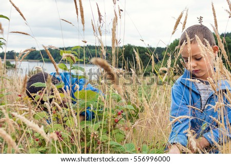 Two children picking wild raspberries in nature