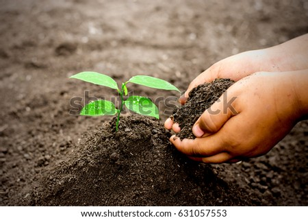 Two children's hands are planting seedling into fertile soil, ecology concept.