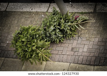 Two Christmas trees on the pavement waiting to be collected by the garbage collectors - stock photo