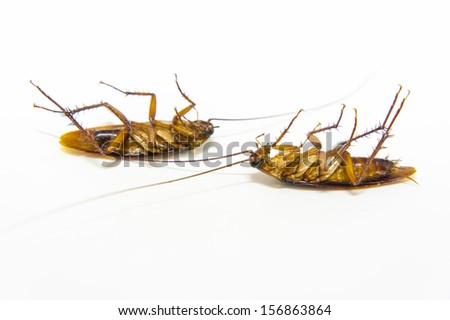 two cockroach dead on isolated background - stock photo