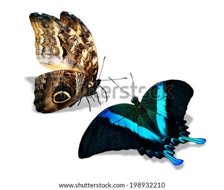Two color butterflies , isolated on white