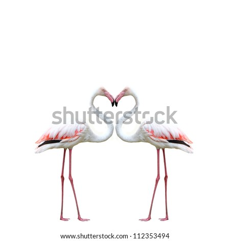 Two colorful flamingos looking at each other and building a hear - stock photo