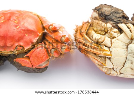 two cooked crabs on a white background - stock photo